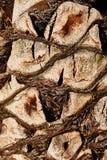 De textuur van de boomstam van een palm De boomstam van een palmclose-up royalty-vrije stock foto's