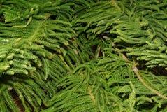 De textuur van de boomtak op een zwarte achtergrond Royalty-vrije Stock Fotografie