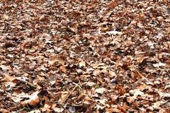 De textuur van dalingsbladeren stock afbeelding