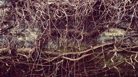 De textuur van de aard Royalty-vrije Stock Foto