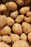De textuur van de aardappel Stock Afbeeldingen