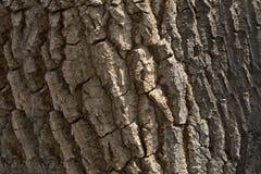 De Textuur van de achtergrond boomschors Patroon Stock Fotografie