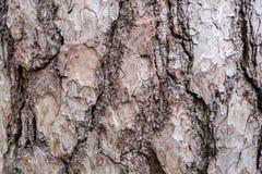 De Textuur van de achtergrond boomschors Patroon Stock Afbeelding