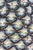 De textuur van de ananas Royalty-vrije Stock Afbeeldingen