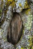 De textuur van de berk van de boomschors is beschadigd De achtergrond van de berktextuur Royalty-vrije Stock Afbeeldingen