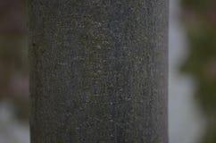 De textuur van de berkboom Stock Foto