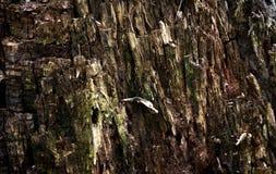 De textuur van de beschadigde boomboomstam Houten achtergrond Royalty-vrije Stock Fotografie