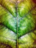 De textuur van de bladeren Stock Foto's