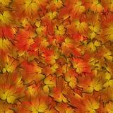 De Textuur van de Bladeren van de herfst Stock Foto's