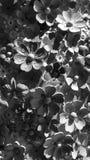 De textuur van de bloem bas hulp Stock Foto's
