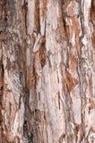 De textuur van de boom Stock Fotografie
