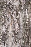 De textuur van de boom Royalty-vrije Stock Afbeeldingen