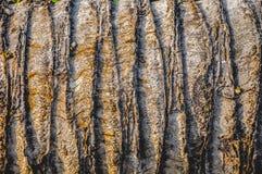 De textuur van de boom Stock Foto