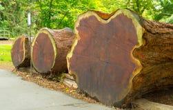 De textuur van de boom is in een sectie Stock Afbeeldingen