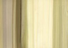 De Textuur van de Boom van de tulp Royalty-vrije Stock Foto