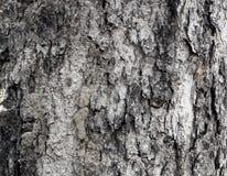 De textuur van de boomoppervlakte Royalty-vrije Stock Foto's