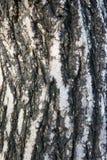 De textuur van de boomschors Stock Afbeelding