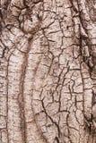 De textuur van de boomschors voor achtergrond Royalty-vrije Stock Afbeeldingen