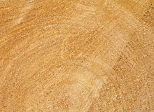 De textuur van de boomstamwilg Stock Foto's