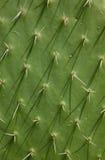 De Textuur van de cactus Stock Foto
