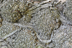 De textuur van de close-up van de boomschors Royalty-vrije Stock Foto