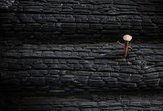 De textuur van de close-up van gebrand hout met een roestige spijker Stock Afbeeldingen