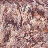 De Textuur van het korstmos en van de Steen Royalty-vrije Stock Afbeeldingen