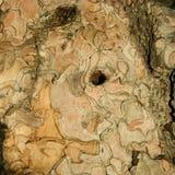 De textuur van de de boomschors van de pijnboom stock fotografie