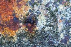 De Textuur van de eendenmosselschipbreuk Stock Foto's