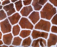 De Textuur van de giraf Stock Afbeelding