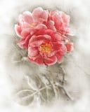De textuur van de Grungemuur met bloemenachtergrond Stock Foto