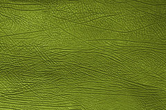 De textuur van de huid Stock Afbeeldingen