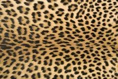 De textuur van de huid van luipaard stock foto's