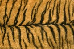 De textuur van de huid van tijger Stock Afbeeldingen