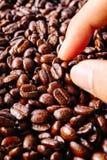 De textuur van de koffieboon Royalty-vrije Stock Afbeeldingen