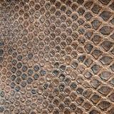 De textuur van de krokodil royalty-vrije stock afbeelding