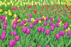 De textuur van de lenteinstallaties Stock Afbeelding