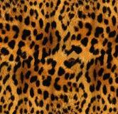 De textuur van de luipaard Royalty-vrije Stock Afbeeldingen