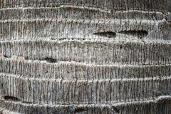 De textuur van de palmschors Stock Afbeeldingen