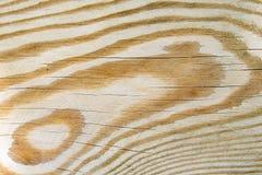 De textuur van de pijnboomboom Stock Afbeeldingen