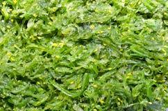 De Textuur van de Salade van het zeewier Royalty-vrije Stock Foto