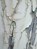 De Textuur van de Schil van de Verf van Grunge   stock foto