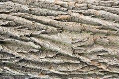De textuur van de schors Stock Afbeelding