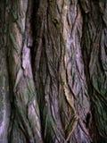De textuur van de schors Royalty-vrije Stock Afbeelding
