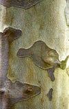 De textuur van de schors Stock Fotografie
