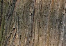 De textuur van de schors Royalty-vrije Stock Foto's