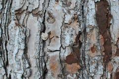 De textuur van de schors Stock Foto