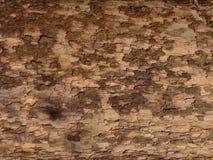 De Textuur van de schors Stock Afbeeldingen