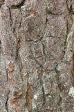 De textuur van de schors Royalty-vrije Stock Fotografie