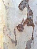 De textuur van de schors Stock Foto's